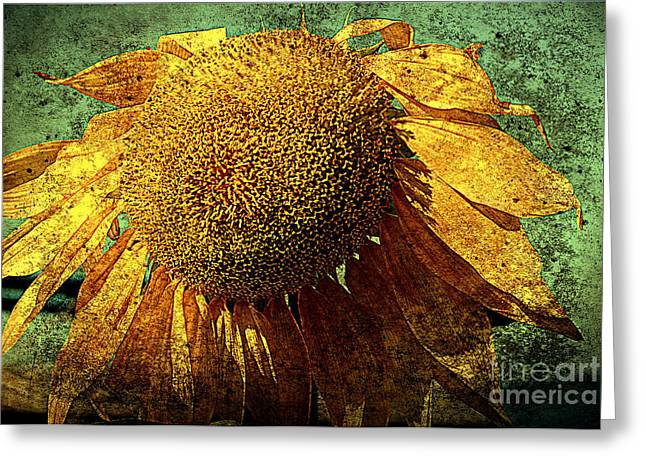 Texture Flower Greeting Cards - Sunflower 2 Greeting Card by Susanne Van Hulst