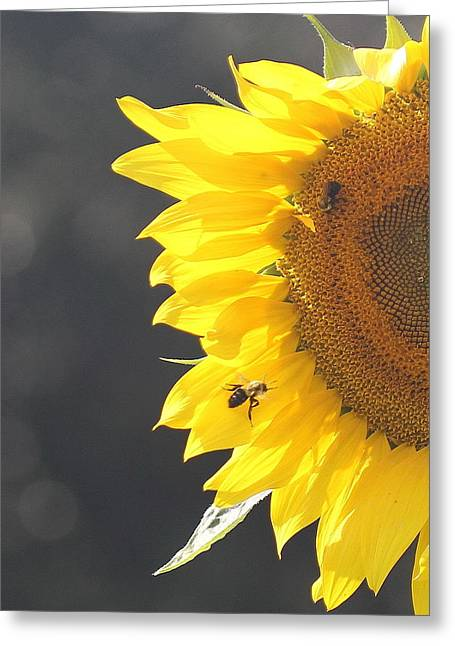Photographers Conyers Greeting Cards - Sunflower 3 Greeting Card by Cathy Lindsey