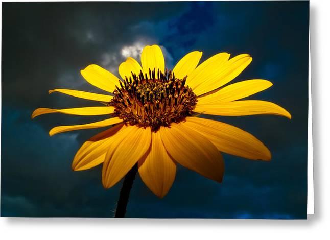 Taos Greeting Cards - Sunflower Greeting Card by Adam  Schallau