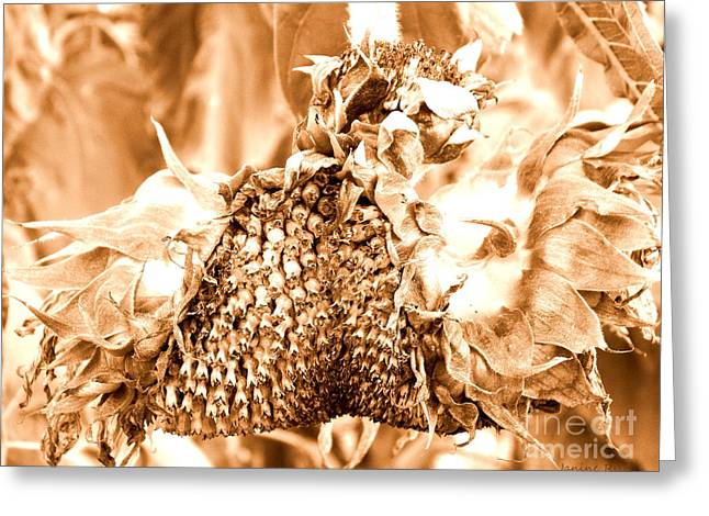 Girasole Greeting Cards - Sunflower - After Summer has Gone Greeting Card by Janine Riley