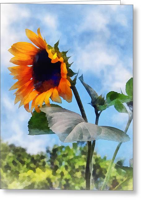 Sunflower Greeting Cards - Sunflower Against the Sky Greeting Card by Susan Savad