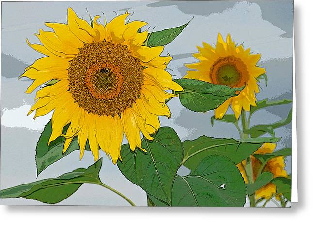 Sunflower Greeting Card by Aimee L Maher Photography and Art Visit ALMGallerydotcom