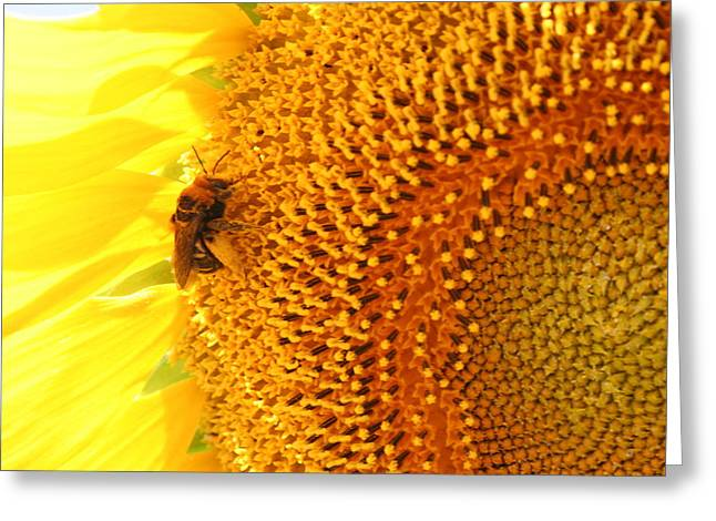 Kansas Pyrography Greeting Cards - Sunflower and Bee Greeting Card by Cary Amos