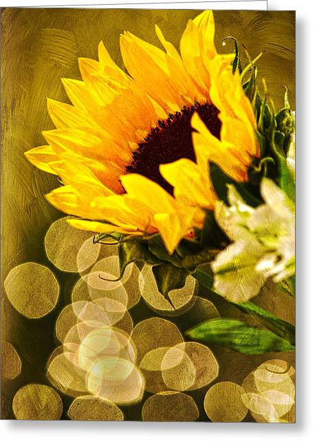 Sandi Oreilly Greeting Cards - Sunflower And The Lights Greeting Card by Sandi OReilly