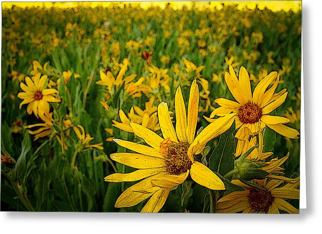 Lots Of Daisies Greeting Cards - Sunflower Army Greeting Card by Laurie Purcell