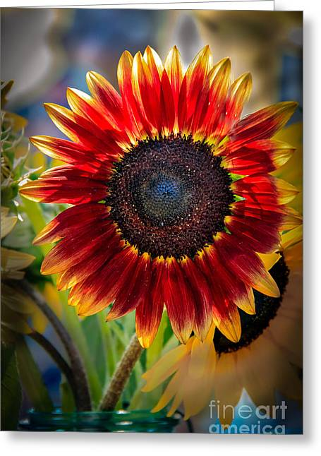 Sunflower Beauty Greeting Card by Robert Bales