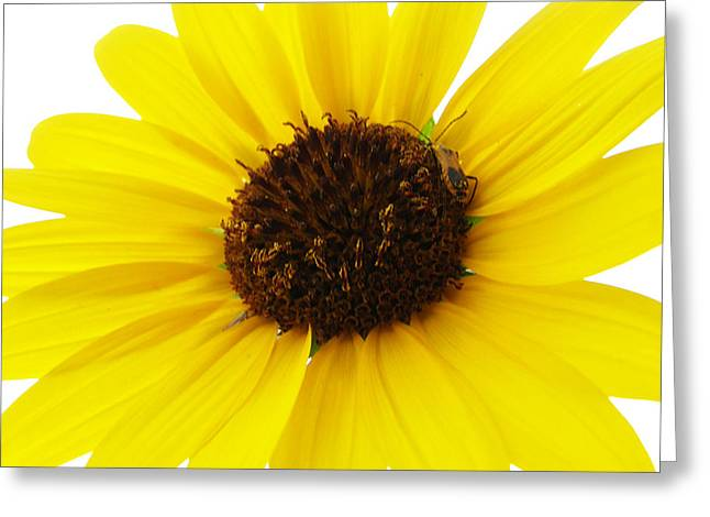 Becky Greeting Cards - #iwantyoutonotice Greeting Card by Becky Furgason
