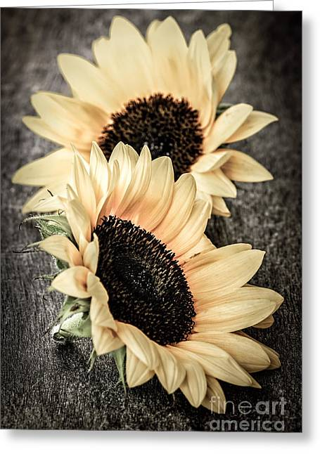 Flora Greeting Cards - Sunflower blossoms Greeting Card by Elena Elisseeva