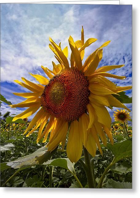 Park Scene Greeting Cards - Sunflower Blue Greeting Card by Debra and Dave Vanderlaan