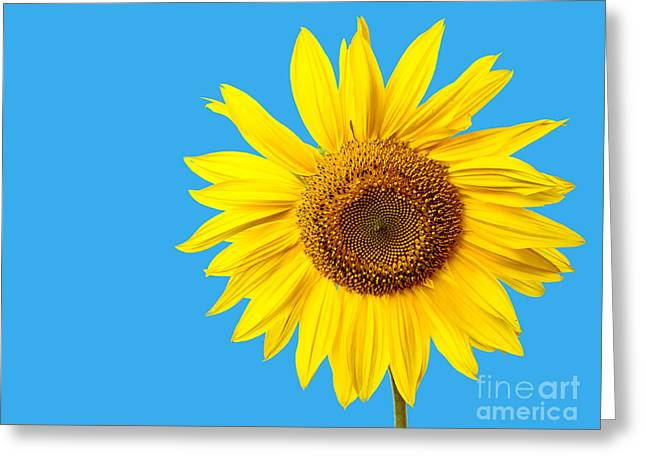 Isolated On White Greeting Cards - Sunflower Blue Sky Greeting Card by Edward Fielding
