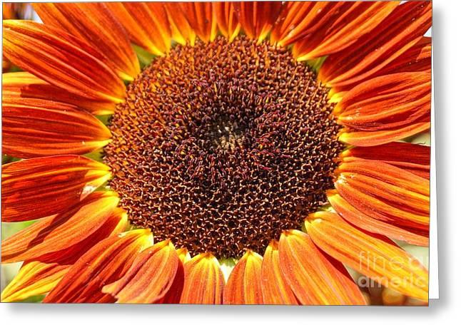 Farmstand Greeting Cards - Sunflower Burst Greeting Card by Kerri Mortenson