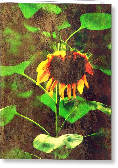 Sunflower Greeting Card by Chastity Hoff