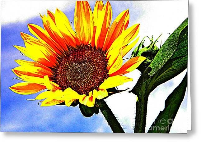 Midwest Artist Greeting Cards - Sunflower   Greeting Card by Chris Berry