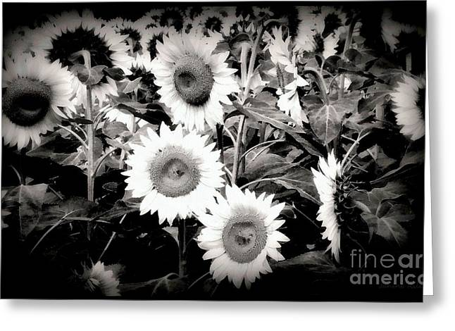 Girasole Greeting Cards - Sunflower Cinema in Black and White Greeting Card by Janine Riley