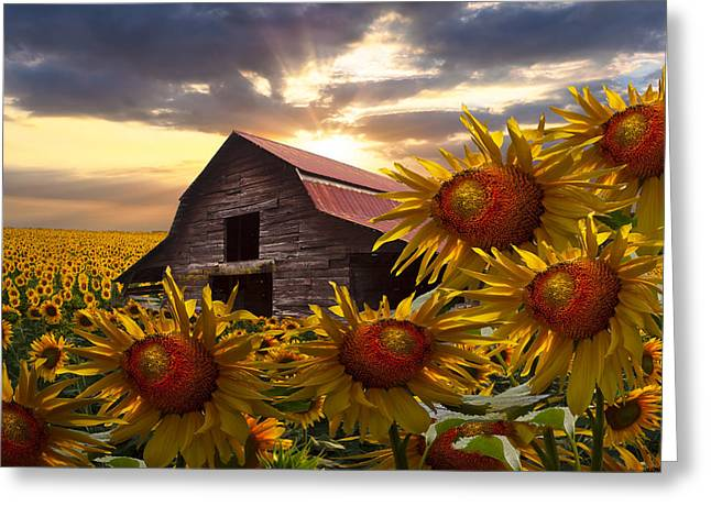 Tennessee Barn Greeting Cards - Sunflower Dance Greeting Card by Debra and Dave Vanderlaan