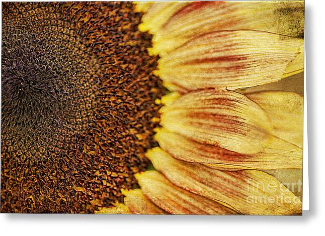 Yellow Sunflower Greeting Cards - Sunflower Greeting Card by Darren Fisher
