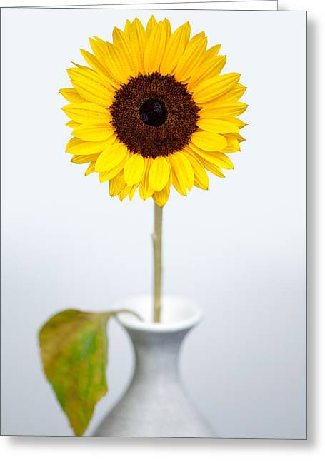 Sunflower Greeting Card by Dave Bowman