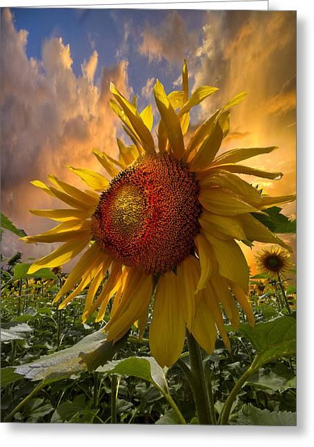 Sunflower Dawn Greeting Card by Debra and Dave Vanderlaan