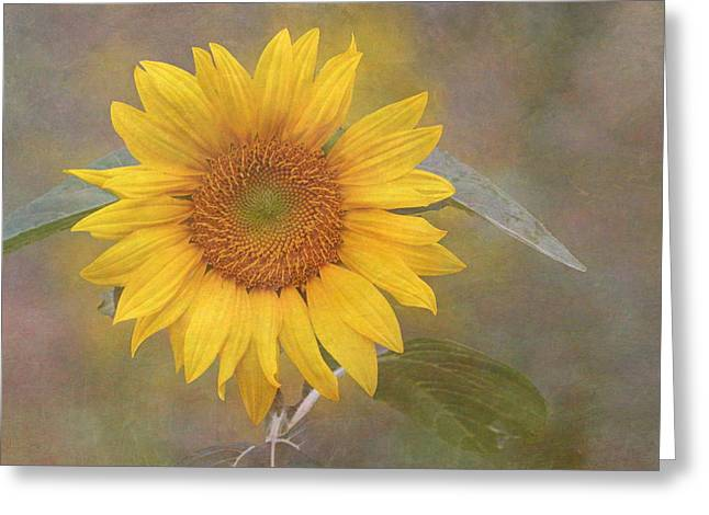 Enhanced Greeting Cards - Sunflower Dream Greeting Card by Angie Vogel