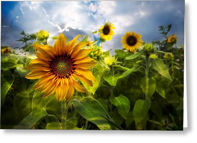 Pretty Scenes Greeting Cards - Sunflower Dream Greeting Card by Debra and Dave Vanderlaan