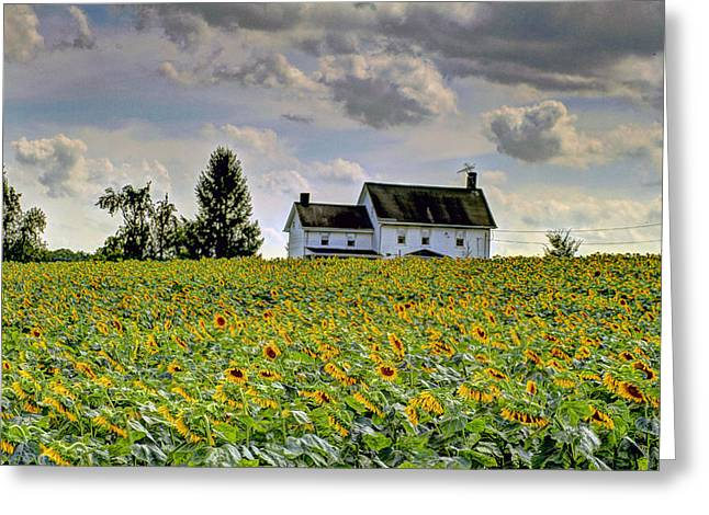 Moos Greeting Cards. Greeting Cards - Sunflower Field 4 Greeting Card by Geraldine Scull