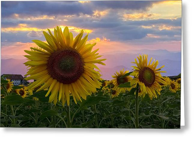 Swiss Photographs Greeting Cards - Sunflower Field Greeting Card by Debra and Dave Vanderlaan