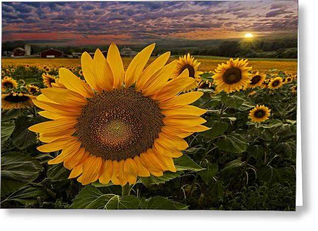 Pictorial Landscape Greeting Cards - Sunflower Field Forever Greeting Card by Susan Candelario