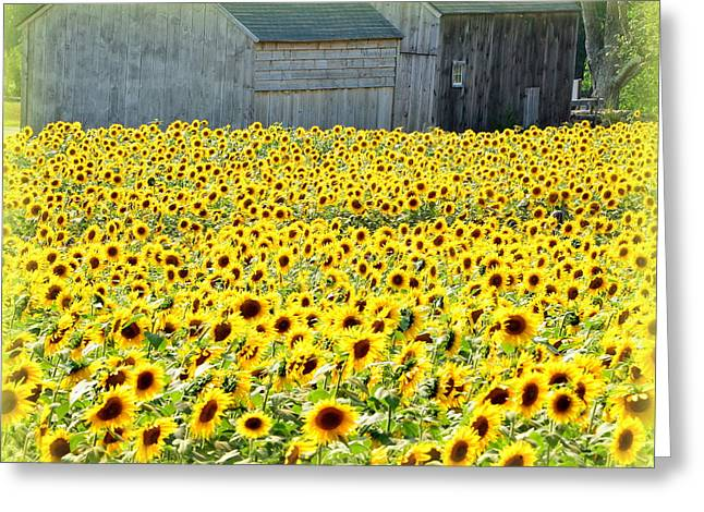 Sunflower Field Of Dreams Greeting Card by Kathy Kenney