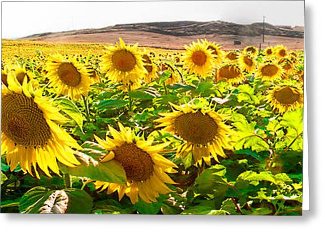 Yellow Sunflower Greeting Cards - Sunflower field Greeting Card by Weston Westmoreland