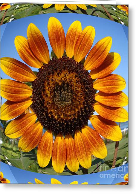 Maine Landscape Greeting Cards - Sunflower  Fisheye Effect Greeting Card by Patricia Urato