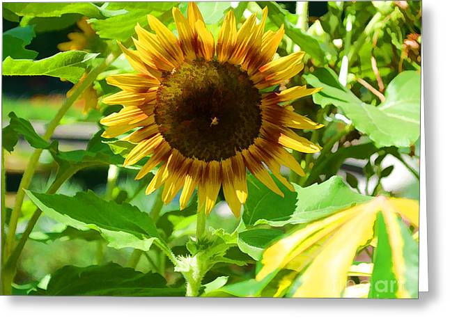 From Seed Greeting Cards - Sunflower from Mark Twain Greeting Card by Luther   Fine Art