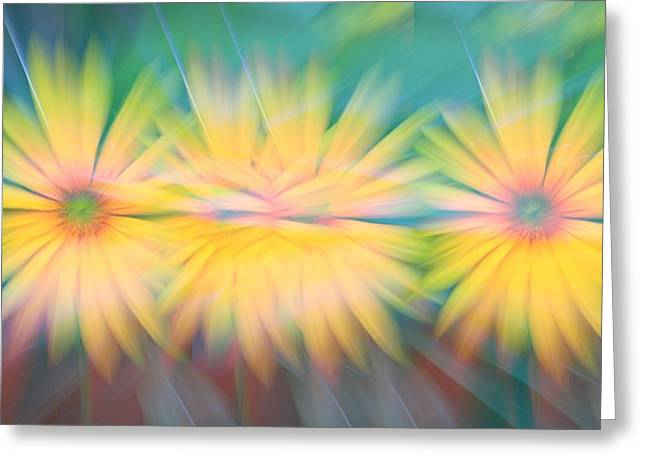 Sunflower Garden Abstract Greeting Card by Dan Sproul