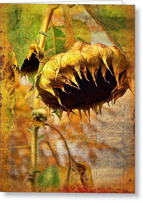 Sunflower Greeting Card by Gynt