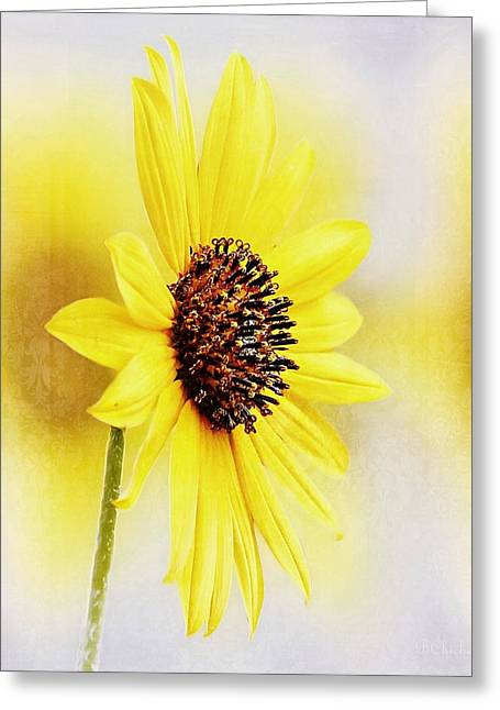 Stamen Digital Art Greeting Cards - Sunflower Impressions Greeting Card by Barbara Chichester