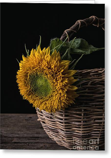 Bloosom Greeting Cards - Sunflower in a basket Greeting Card by Edward Fielding