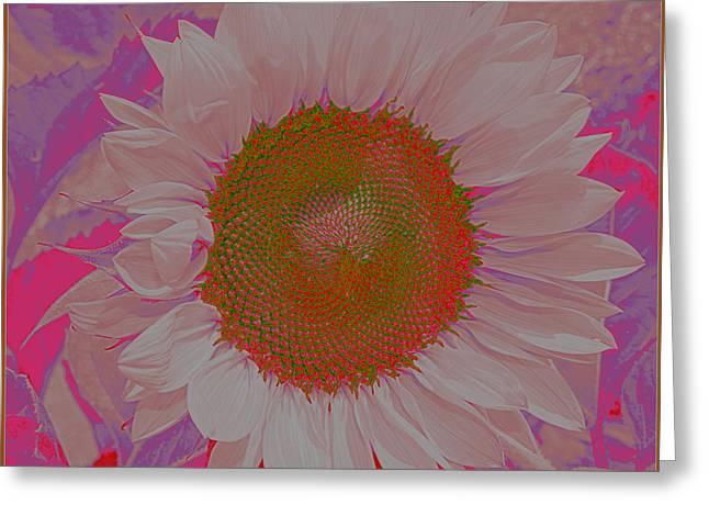 Pinks And Purple Petals Photographs Greeting Cards - Sunflower in Pink and Purple Pop Art Greeting Card by  Photographic Art and Design by Dora Sofia Caputo