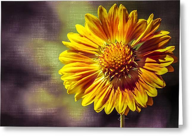 Eureka Springs Greeting Cards - Sunflower In Purple Greeting Card by Carolyn Marshall