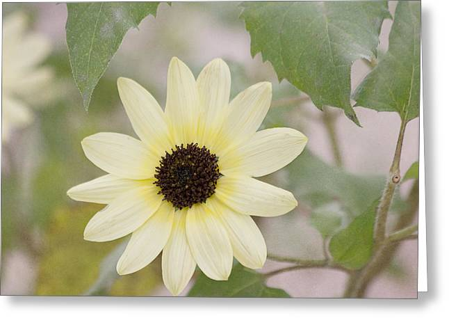 Yellow Sunflower Greeting Cards - Sunflower in the Garden Greeting Card by Kim Hojnacki