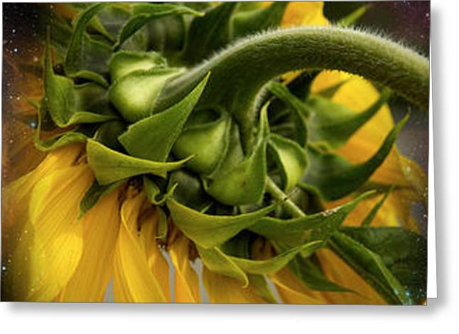 Environmental Concerns Greeting Cards - Sunflower In The Hubble Cosmos Greeting Card by Panoramic Images