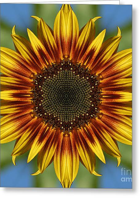 Floral Digital Art Digital Art Greeting Cards - Sunflower Kaleidoscope Greeting Card by Cindi Ressler
