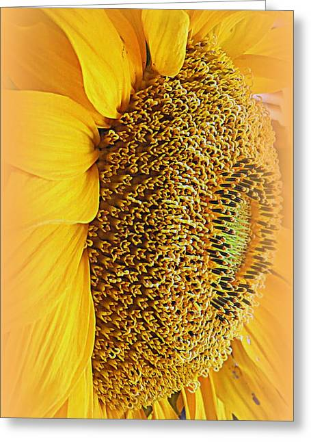 Kkphoto1 Greeting Cards - Sunflower Greeting Card by Kay Novy