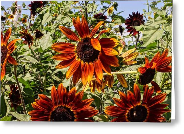 Sunflower Layers Greeting Card by Kerri Mortenson