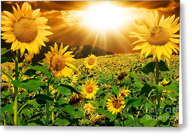 Flower Greeting Cards Pyrography Greeting Cards - Sunflower Light Magic Greeting Card by Boon Mee