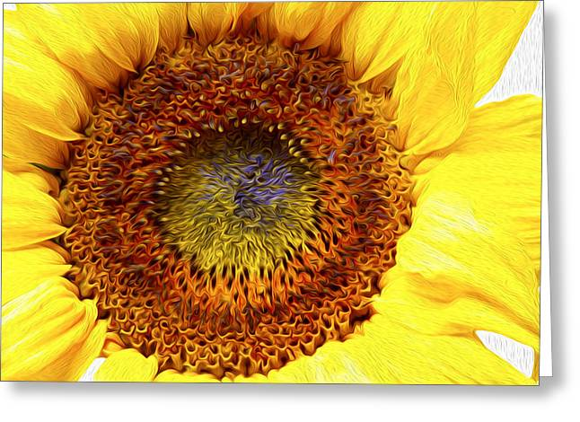 Close In Greeting Cards - Sunflower love Greeting Card by Les Cunliffe