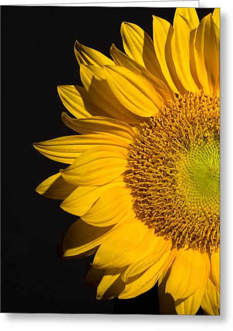 Aesthetic Greeting Cards - Sunflower Greeting Card by Mark Ashkenazi