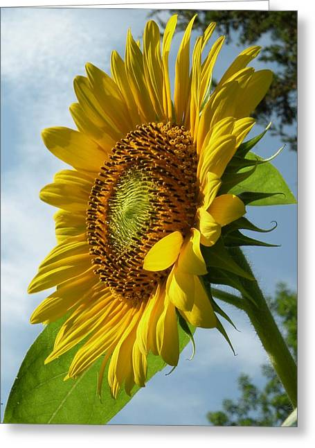 Christine Belt Greeting Cards - Sunflower No. 49 Greeting Card by Christine Belt