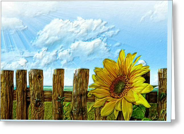 Sunflower Patch Greeting Cards - Sunflower on a cool Autumn Day Greeting Card by Bruce Nutting
