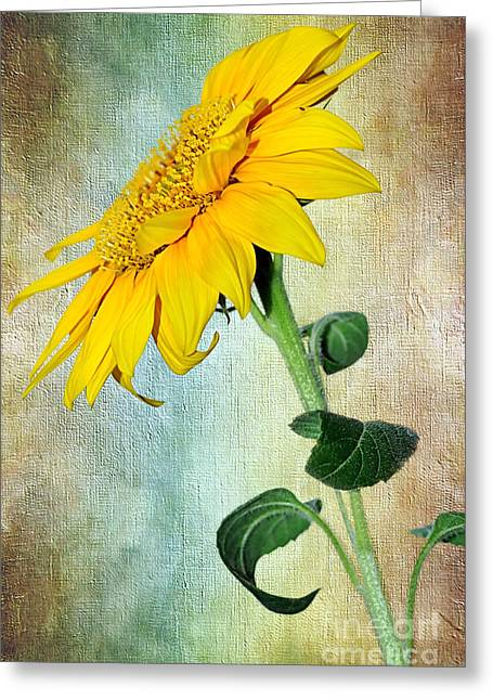Stamen Digital Greeting Cards - Sunflower on Textured Canvas Greeting Card by Kaye Menner