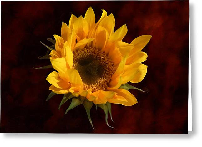 Sunflower Greeting Cards - Sunflower Opening Greeting Card by Susan Savad