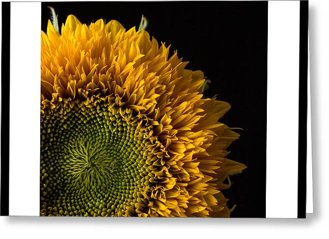Sunflower Original Signed Mini Greeting Card by Edward Fielding